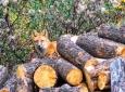 joans-fox-10_16-hdr