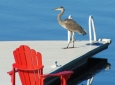 red-chair-blue-herron